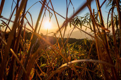 Wschód słońca nad wzgórzami obraz royalty free