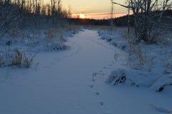 Wschód słońca nad zamarzniętą zimą lasową rzeką zakrywającą z śniegiem Obraz Royalty Free