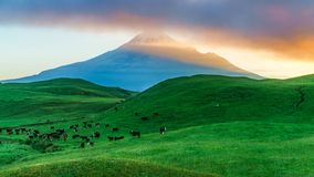 Wschód słońca nad zieloną trawą, szyszkowy wulkanu mt taranaki, nowy Zealand obraz stock