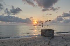Wschód słońca & Nieżywy drzewo Zdjęcia Royalty Free