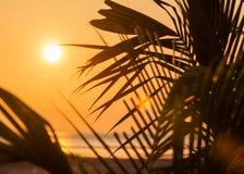 wschód słońca palmowi drzewa obrazy royalty free