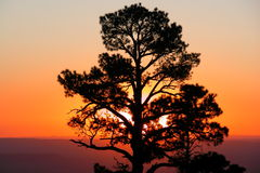 wschód słońca ponderosa fotografia stock