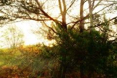 Wschód słońca Przez drzew Fotografia Stock