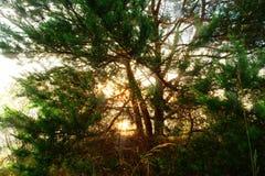 Wschód słońca Przez drzew Obraz Royalty Free