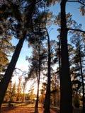 Wschód słońca Przez drzew Obrazy Royalty Free