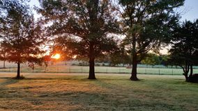 Wschód słońca przez drzewa Zdjęcie Royalty Free