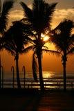 Wschód słońca przez drzewek palmowych przy Durban plażą Zdjęcia Stock