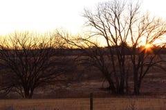Wschód słońca przez paśniki robi ptasiemu polowaniu swój best zdjęcia royalty free