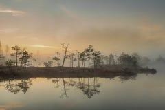 Wschód słońca przy bagnem z małymi sosnami zakrywać w wczesnym poranku Zdjęcia Royalty Free