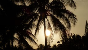 Wschód słońca przy Kalama, Kailua -, Hawai'i Obraz Stock