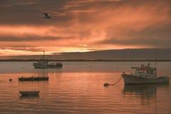 Wschód słońca przy Rybim molem na Cape Cod z łodziami w przedpola i seagull latającym koszt stały Zdjęcie Stock
