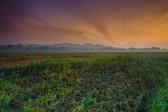 Wschód słońca przy tanjung rejo kudu, Indonesia z łamanym ryżu polem, wzgórzem i mgłą, obrazy royalty free