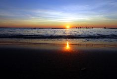 wschód słońca ptaka Obrazy Royalty Free