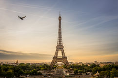 Wschód słońca scena wieża eifla z gołębiem lata beside, Paryż fotografia royalty free