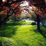 Wschód słońca ulica Obraz Royalty Free