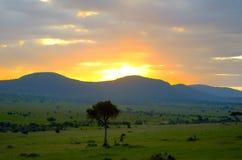 Wschód słońca w afrykańskiej sawannie, Kenja, Afryka Obraz Royalty Free