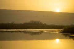 Wschód słońca w Agamon Hula ptaka schronieniu Zdjęcia Royalty Free