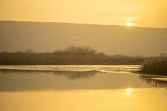 Wschód słońca w Agamon Hula ptaka schronieniu Zdjęcia Stock