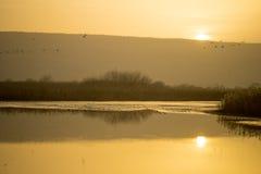 Wschód słońca w Agamon Hula ptaka schronieniu Fotografia Royalty Free