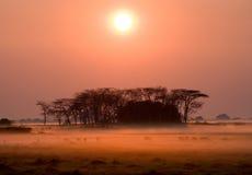 Wschód słońca w Kafue parku narodowym Oszałamiająco menchii mgła Afryka Zambiowie Obraz Stock