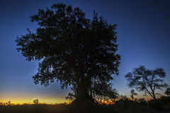 Wschód słońca w Kruger parku narodowym, Południowa Afryka Obraz Stock