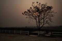 Wschód słońca w lecie przy herbacianej plantacji terenem w północy Tajlandia obrazy stock