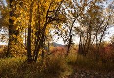 Wschód słońca w lesie Obrazy Royalty Free