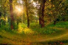 Wschód słońca w lesie Zdjęcia Royalty Free
