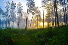 Wschód słońca w lesie Zdjęcie Royalty Free