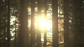 Wschód słońca w lesie zbiory wideo