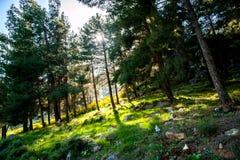 Wschód słońca w lesie Zdjęcie Stock