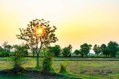 Wschód słońca w moring na polu obraz royalty free