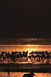 Wschód słońca w Nakuru Kenja Obraz Stock