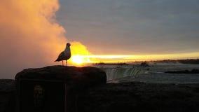 Wschód słońca w Niagara spadkach Zdjęcie Stock