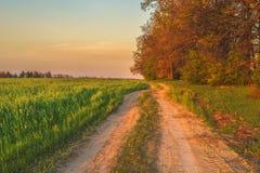 Wschód słońca w pszenicznym polu obraz stock