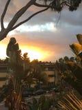 Wschód słońca w SanDiego, drzewka palmowe Obrazy Royalty Free