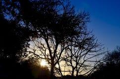 Wschód słońca w Teksas Obrazy Royalty Free