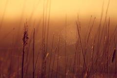Wschód słońca w trawie obrazy royalty free
