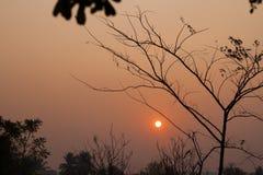 Wschód słońca z gałąź, Złota godzina obraz royalty free