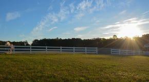 Wschód słońca z koniami Obrazy Stock