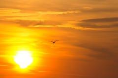 Wschód słońca z ptakiem Fotografia Royalty Free