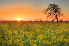 Wschód słońca z samotnym drzewem Zdjęcie Stock