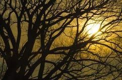 Wschód słońca za drzewem Obrazy Royalty Free