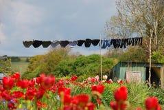 Wäscherei, die auf dem Gebiet hängt Lizenzfreies Stockfoto
