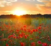 Wschodów słońca maczki Obrazy Royalty Free