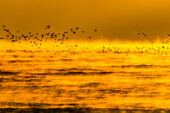 Wschodów słońca ptaki Zdjęcie Royalty Free