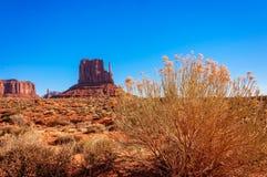 Wschodni Mitte Butte i złoci pustynni kwiaty Zdjęcia Royalty Free