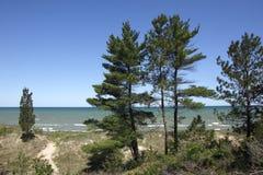 Wschodnie Białe sosny na piasek diuny grani obrazy royalty free