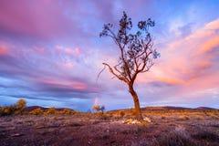 Wschodu słońca drzewo zdjęcia stock