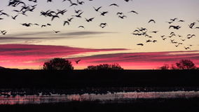 Wschodu słońca Flyout zdjęcie wideo